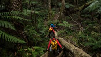 Entering the temperate rainforest on route to Bowens Creek Canyon | Wolter Peeters | SMH
