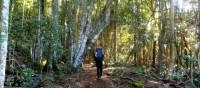 Enjoying the beautiful rainforest on Federal Pass | Millie Malfroy