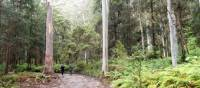 Majestic trees on route to Kedumba campsite | Millie Malfroy