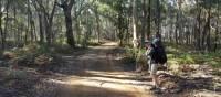 Walking the Six Foot Track | Linden Murden