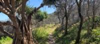 Walking on The Yuraygir Coastal Walk | Clayton Hanlon