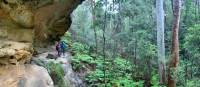 Exploring the lush rainforest gullies of the Blue Mountains | Michael Buggy
