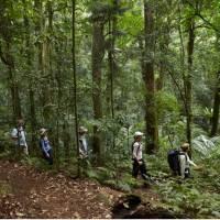 Scenic Rim rainforest walk