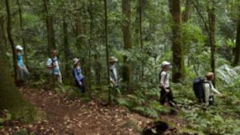 Scenic Rim rainforest walk