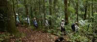 Rainforest walk on the Scenic Rim Trail
