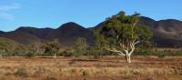 Beautiful trees growing in Mount Remarkable National Park | Asaf Miller