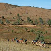 Exploring the Northern Flinders Rangers by Camel on our first Camel Trek. | Andrew Bain