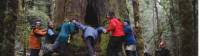 Trekkers participate in a big tree dance on the Overland Track |  <i>Gary Hayes</i>