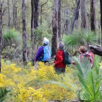 Walkers on the Bibbulmun Track