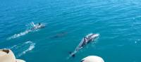 Dolphins around Steep Island in Doubtful Bay, Western Australia | Tim Macartney-Snape