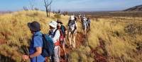 Endless walking opportunities await in Karijini National Park