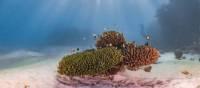 Spectacular Ningaloo Reef | Jake Parker