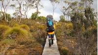 'It was the best choice I could have made',  'an amazing holiday we will never forget...'  'If this is something you are considering, just do it, you won't regret it!' This is just some of the feedback we have had from our clients on their Overland Track experience. Find out why this is one of the most popular Tasmanian walks... and why you should experience it!  The Overland Track is Tasmania's most renowned walk. On this 6 day trek, experience the breathtaking views, from the stunning crags of Cradle Mountain to the rainforest-clad shores of Lake St. Claire, with many exciting side trips along the way.  Highlights include: - Walk Australia's internationally famous Overland Track - Explore deep forests, sub-alpine plateaus and spectacular highland landscapes - End each day at scenic campsites in the remote wilderness - Summit iconic Cradle Mountain and Tasmania's highest peak, Mt Ossa - Enjoy close encounters with the wildlife and amazing endemic wildflowers - Travel with the most experienced operator on Tasmania's iconic trail - Enjoy delicious 3 course meals prepared by your guides in the evenings   ------------------------------ Like this? Visit our websites: Trekking and guided tour information http://www.australianwalkingholidays.com.au/ http://www.LarapintaTrailWalks.com.au Find us on Facebook http://www.facebook.com/australianwalkingholidays Find us on Twitter http://twitter.com/auswalking Instagram: https://www.facebook.com/AustralianWalkingHolidays Google Plus: https://plus.google.com/u/4/+AustralianWalkingHolidaysSydney